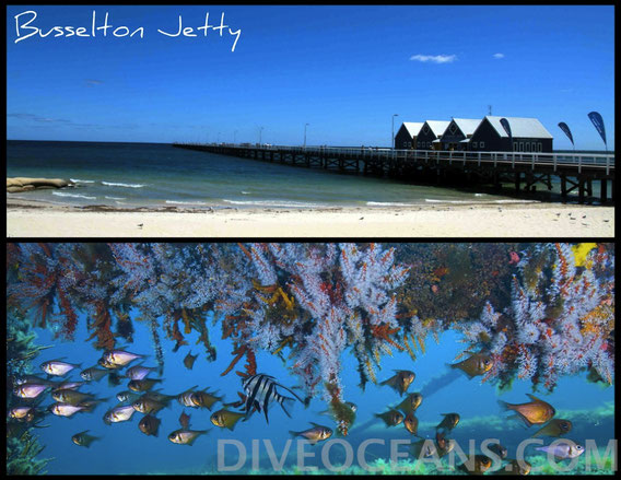 Busselton Jetty Day Tour