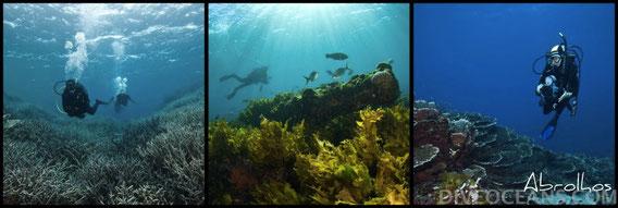 Abrolhos Island Cruise Tour