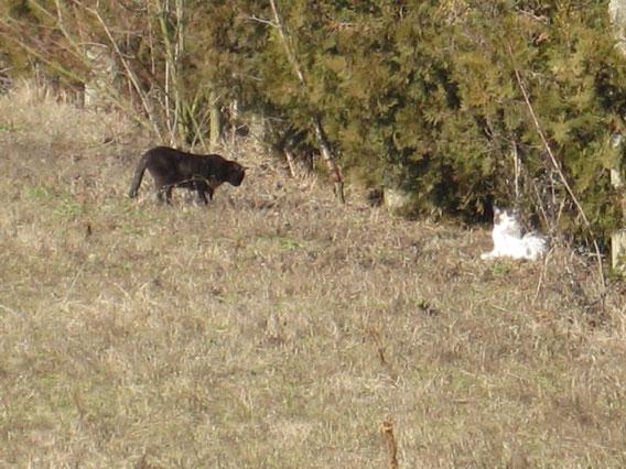 Kastrierte Katzen in Freiheit