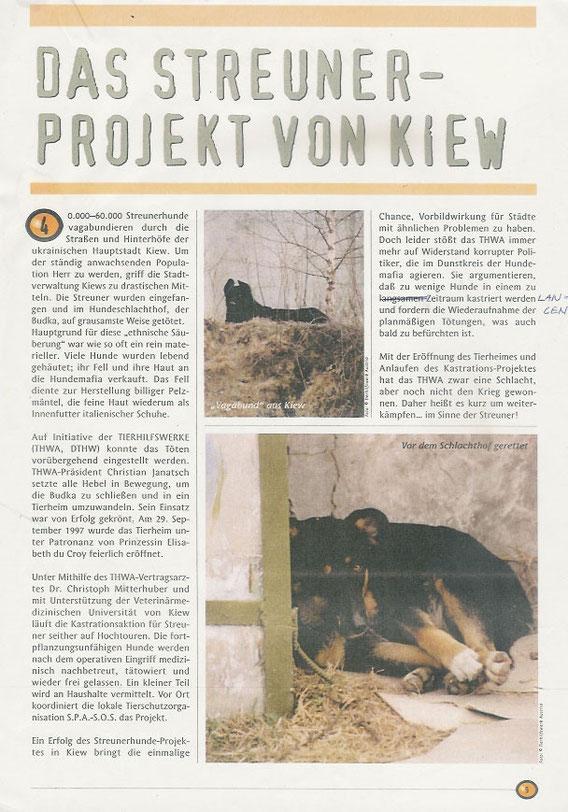 Das Streuner Projekt von Kiew