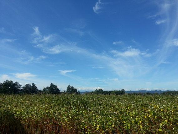 栗山町 蕎麦畑