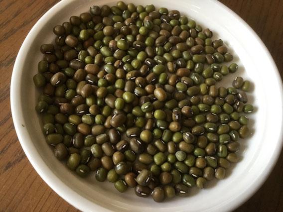 緑豆は数ミリの大きさ。