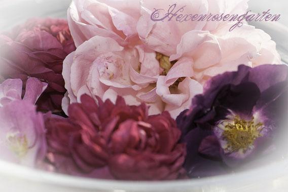 Rosiger Adventskalender im Hexenrosengarten - Die inneren Werte unserer Rose
