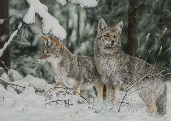 Coyotes - Olio su tela - 50x70