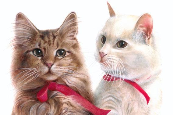 Petra e Prugna, le gattine di Paola
