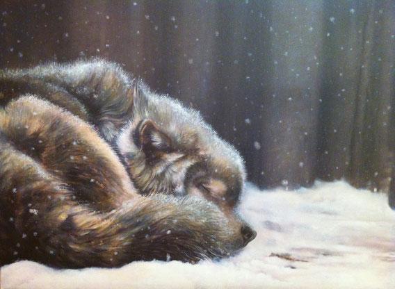 Lupo che dorme nella neve - Olio su tela - (particolare del dittico cm.170x100)