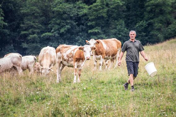 Die warmen Monate verbringen unsere Rinder auf Sommerweiden. Im Winter werden die Tiere im Freilaufstall mit Freigang gehalten.