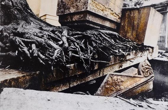 Photographie, noir et blanc, sépia, Paris, Père Lachaise, Mathieu Guillochon, virages, art, arbre, tombes, rien ne se perd tout se transforme, eternal life