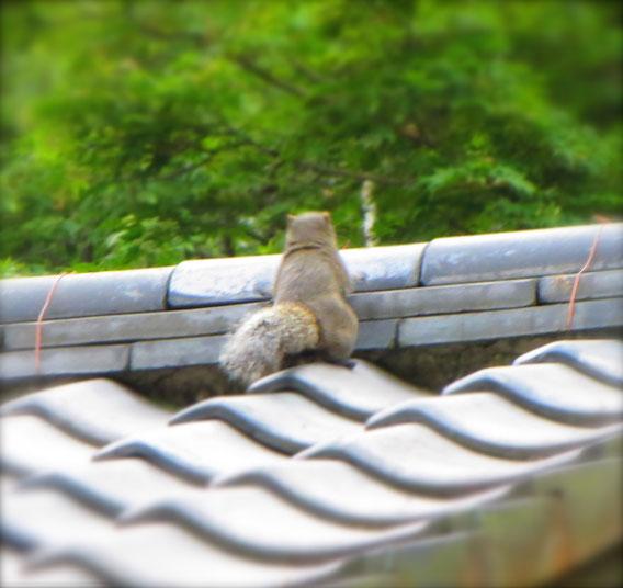 生きているから生きているのだ!屋根に上りたいから上るのだ!と言っているような?潔い後ろ姿だったりす 鎌倉にて