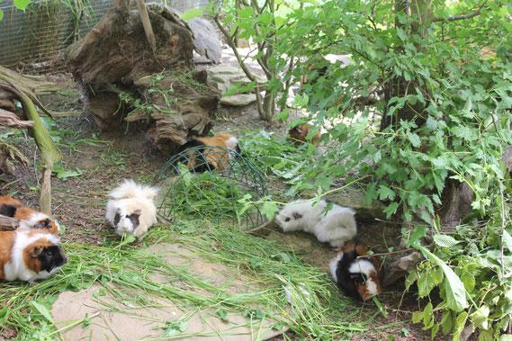 auch wenn es regnet - die Tiere haben trockene Orte in unserem grünen Gehege