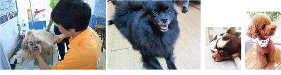 タイのバンコクで子犬、ペットの情報