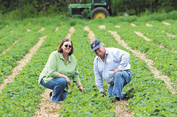 Dave and Ann Kendall of rural Bellevue check the progress of the eight acres of strawberries at their farm on Mill Creek Road.