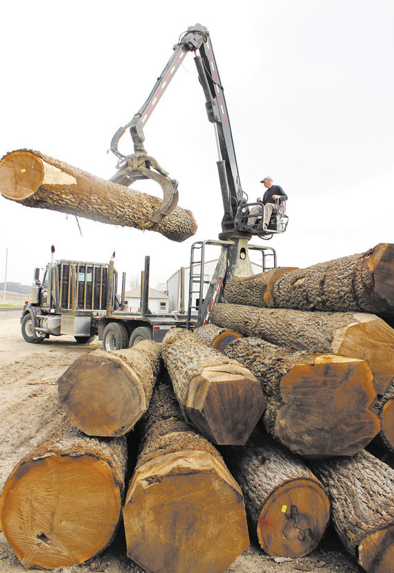 "LOG LOADER: Last Wednesday morning, Orville ""Junior"" Steines and partner Keith Griebel, owners of Steines and Griebel Logging, loaded up a semi-truck at their shop north of town with a load of Walnut that was valued at over $35,000.  The wood was on its w"