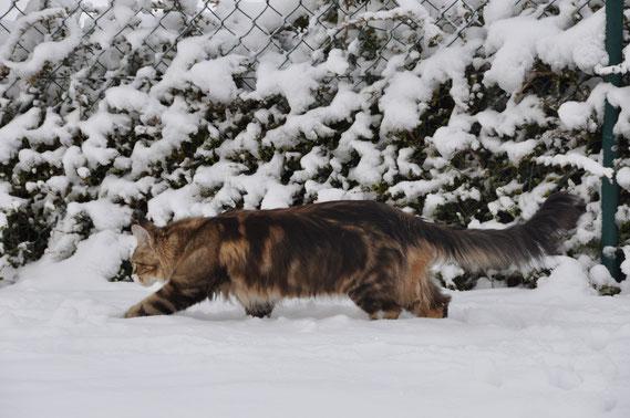 Février 2015 Iyana dans la neige