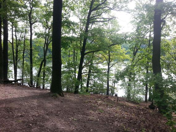 Blick vom Waldweg über den Schlachtensee
