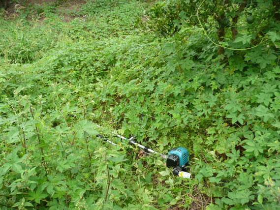 草に埋もれた刈払機