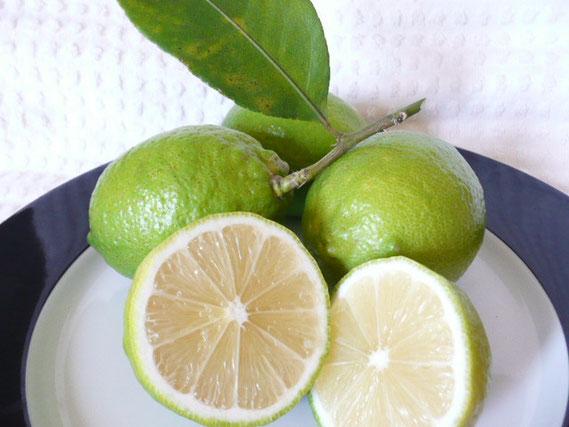 あさつゆマルシェに出荷するレモン