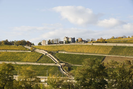 Würzburger Stein - one of Germany's largest Grand Cru vineyards.