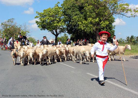 fête,agneau,pauillac,animation,pentecote,medoc,vin,berger,moutons