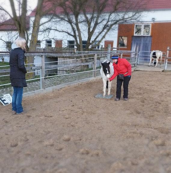 Clickern mit Pferd, Futterposition, Mattentarget, Targettraining