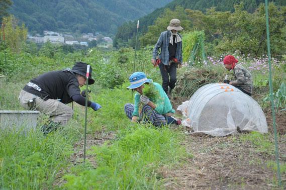 ニンジン 自然栽培 農業体験 体験農場