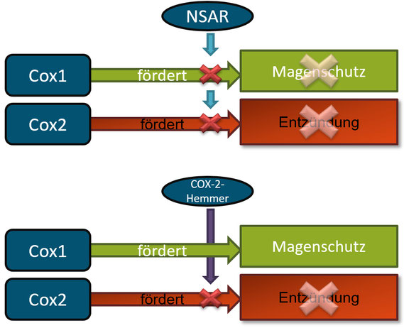 Wirkung von COX-2-Hemmern