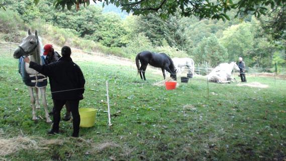 7 chevaux en padock après 40Km