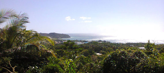 View from Forest Estate Properties
