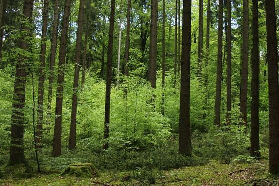 Wald Foto: Norbert Wilhelm