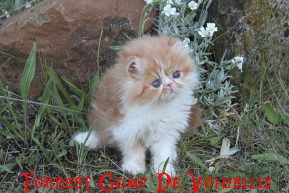 + de photos de Forrest Gump cliquez sur sa photo