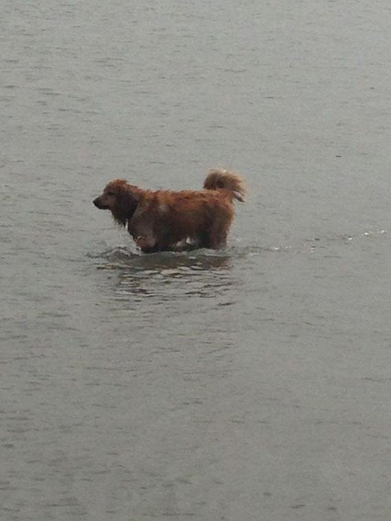viel Wasser, viel Hund... Merlin mit 3 Jahren
