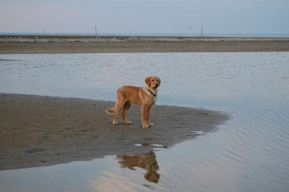 Der junge Hund und das Meer