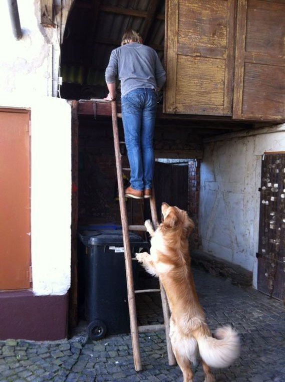 Gibt viel zu tun am neuen zu Hause, Booker hilft wo er kann!