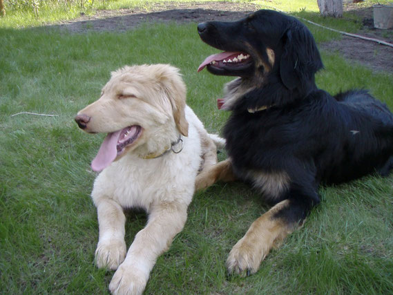 best friends after wild games/ Beste Freunde nach wildem Spiel