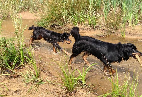 Baki (6 Monate) und Annabelle durchforsten den Amazonas