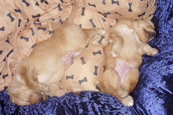 Amie rechts mit MERLIN in Samt und (Hunde)Seide, Tag 28