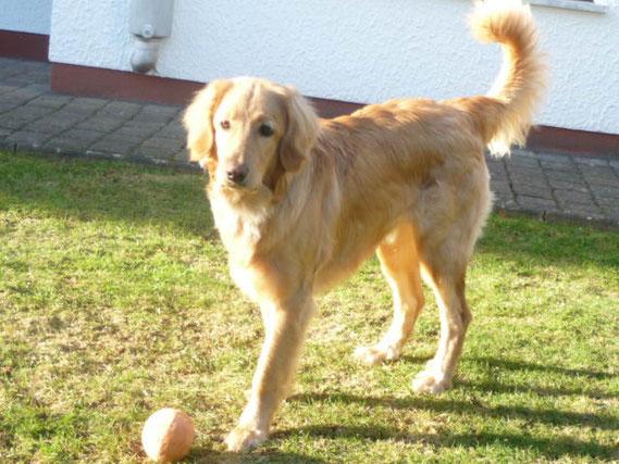 Komm schon Spielen!  Merlin fast 8 Monate (und natürlich hat er noch 4 Beine!)