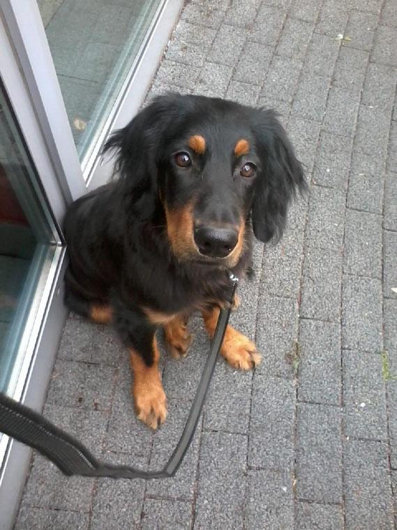 25.06., Baki hat sich wieder in Köln getummelt: im vollen Aufzug hat er genauso entspannt und neugierig gesessen, wie hier vor dem Krankenhaus ( in dem Hunde ja leider noch unerwünscht sind...)