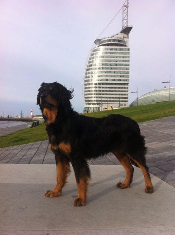 Bakis Kurztripp nach Dubai (Hotelnachbau in Bremerhaven), 11.11.2013