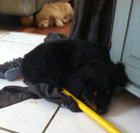 Baki ist der Hausarbeit erlegen..., 12.03.2013