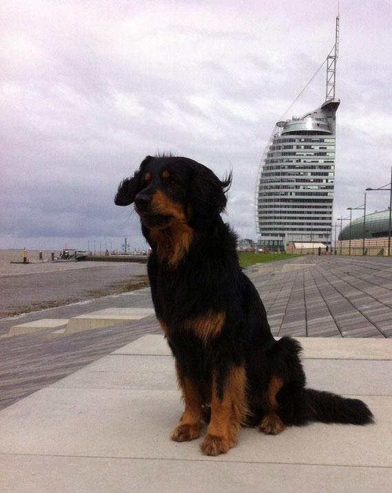 """Mai 2015, Baki tummelt sich mal wieder in """"arabischen Emiraten"""" (Hotelnachbau in Bremerhaven)"""
