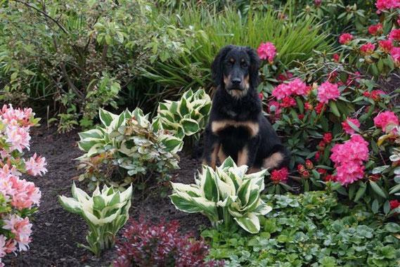 Bjarny als Botaniker, volle 4 Monate alt