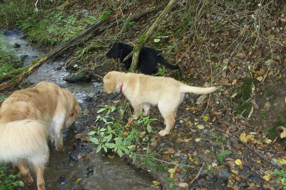 19.09 Ausflug in den Wald; Thaler erklärt den Bach für ungefährlich