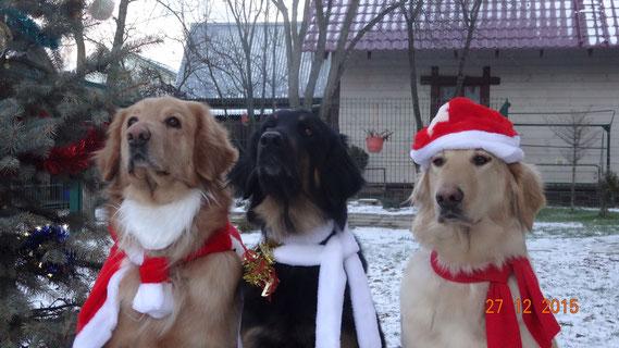 Birdy/BENJAMIN (links) wünscht frohe Weihnachten