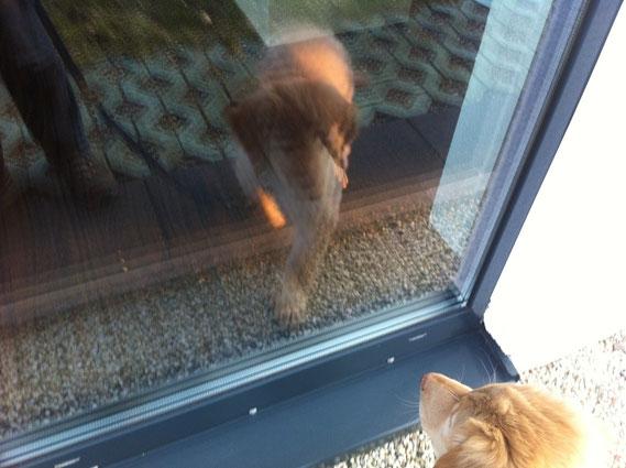 little confusion: Birdy meets himself in the window/ irritierende Spiegelungen