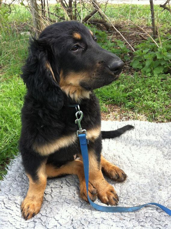 Bastian hat auf dem Hundeplatz eine Decke, die er von früher kennt, gefunden und okkupiert diese erst mal.