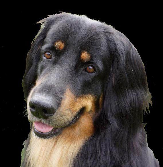 Bjarnys schöner Kopf ziert nun das Hinweisschild zum Hundeplatz in Sannum