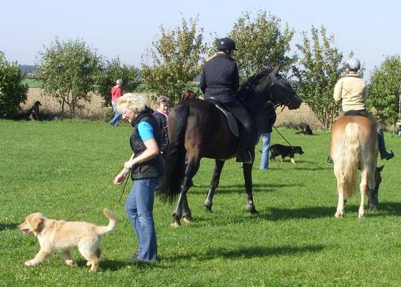 Welpenschule Niederelvenich: Pferdebesuch! (vorne links Merlin/Antek; hinten zwischen den Pferden: Annabelle)