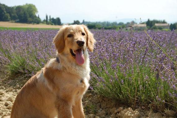 Thalers Sohn vor dem Lavendelfeld