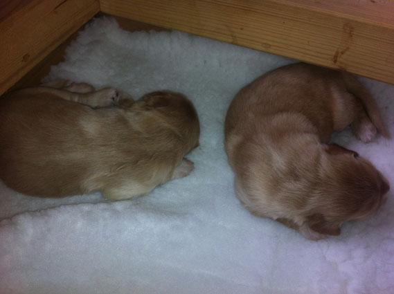 Tag 9, noch gleichen die beiden Blonden einander, wie ein Ei dem anderen (left side: BIRDY)